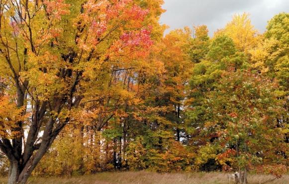 tree color change