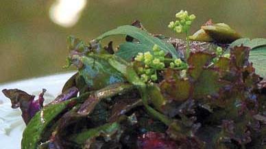 Autumn Berry Kale